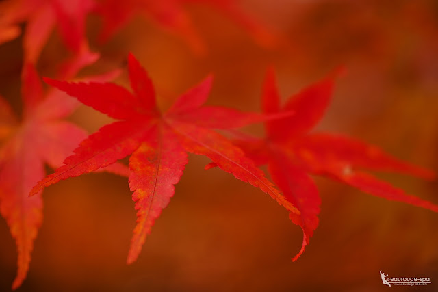 autumnal tints-1