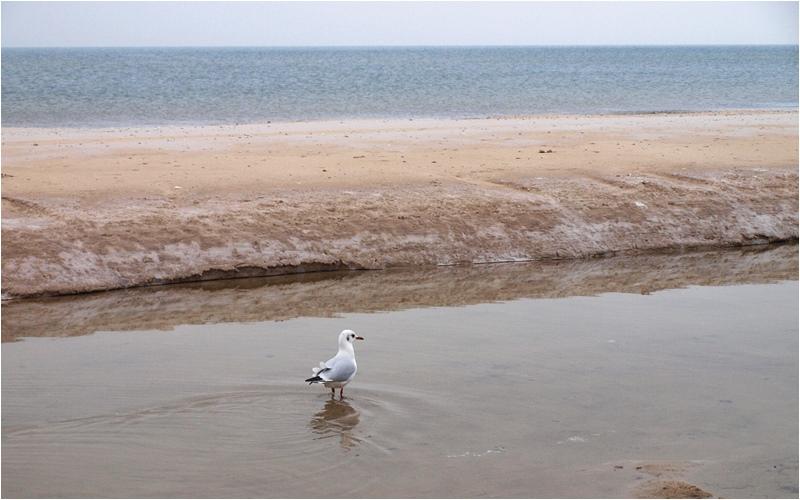 blog o budowie domu nad morzem