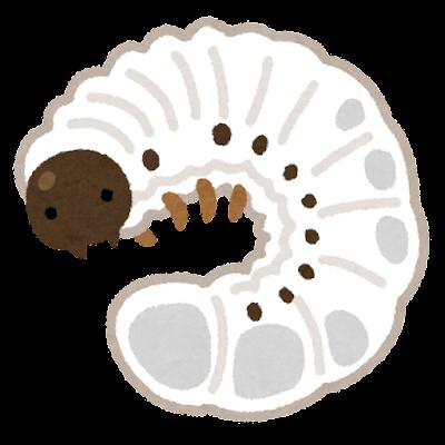 カブトムシの幼虫のイラスト