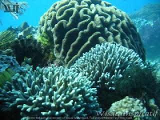 Cantiknya Pesona Alam Bawah Laut di Pulau Morotai, Maluku Utara