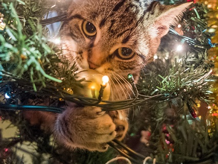 kitten on a Christmas tree