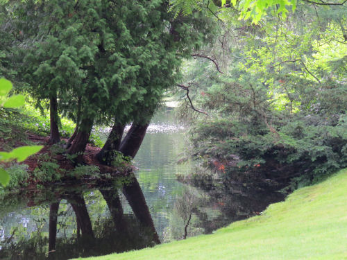 landscape at Dow Gardens