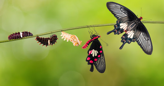 From Caterpillar to Butterfly...
