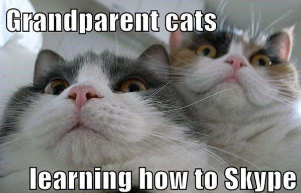 Funny Cat Memes: 30 Funny Animal Captions - Part 8 (30 Pics)