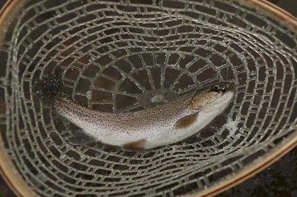 Canadiske dating site fisk
