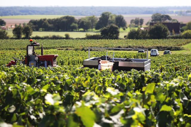 Les vendanges en Bourgogne