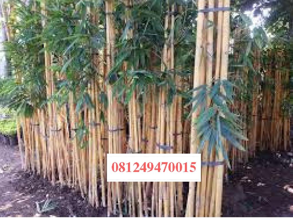 Berpengalaman lebih dari 10th dalam pengerjaan dunia tanaman pohon e10cdcb41b