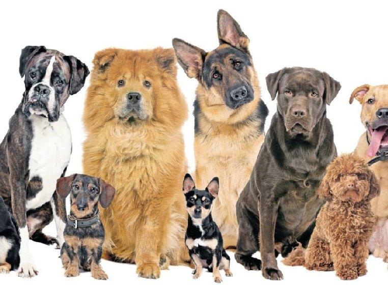 Sekarotuisia Koiria