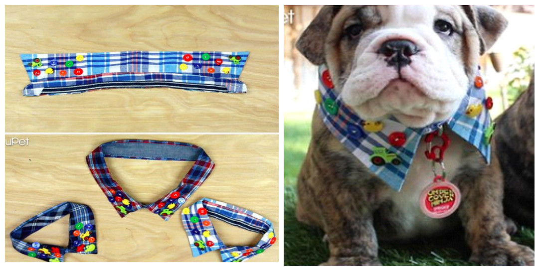 2 ideas de accesorios lindos para mascotas reciclando for Accesorios para mascotas