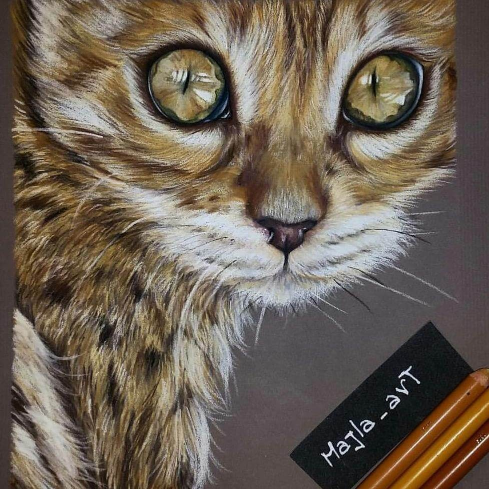 12-The-Cat-Majla-Colorful-Precise-and-Realistic-Animal-Drawings-www-designstack-co