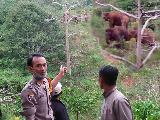 Kawanan Gajah Liar Resahkan Warga Suoh