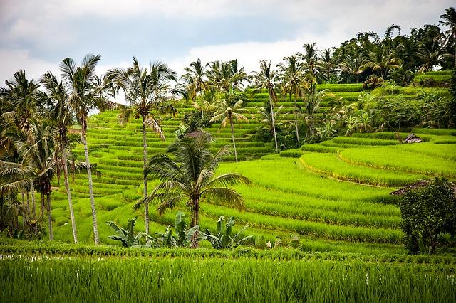 Indonesian Rice Terraces Bali