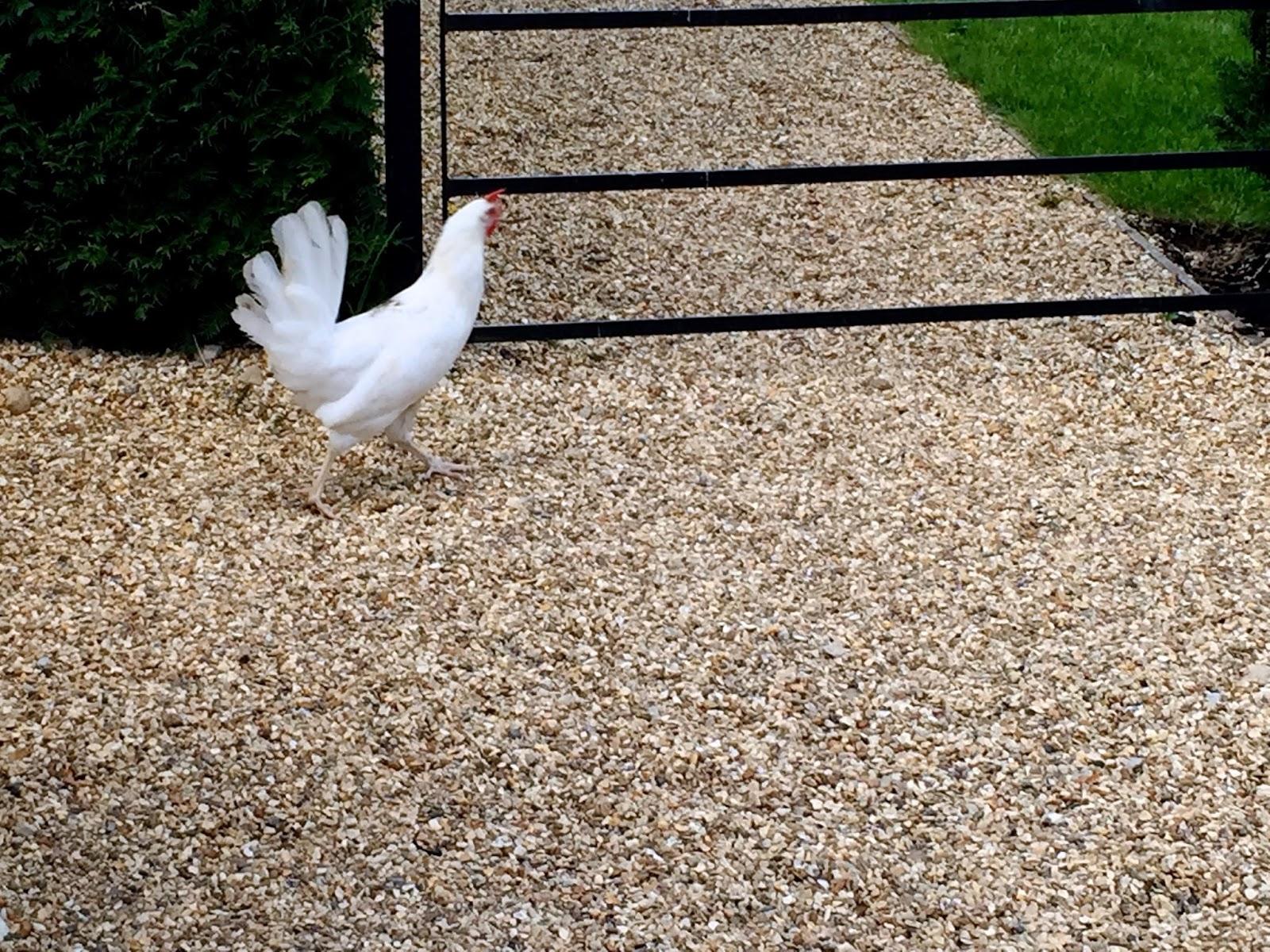 daylesford farm chicken