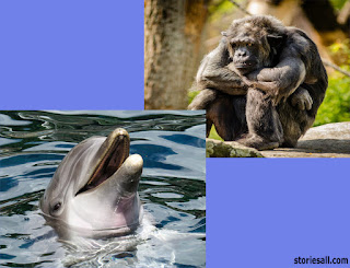 The Monkey and the Dolphin, short moral story