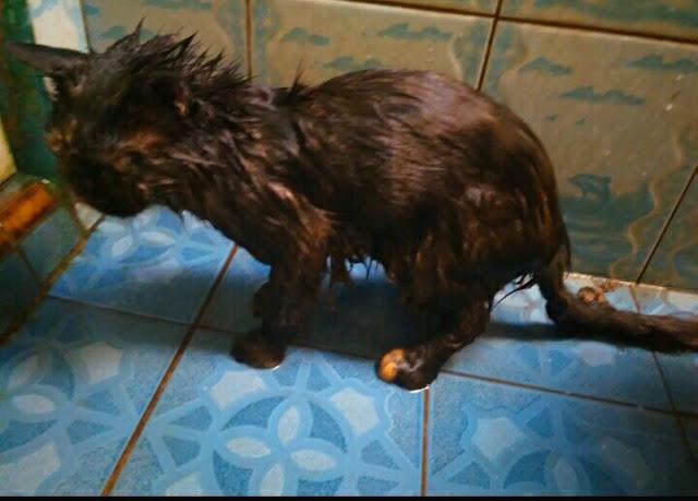 Kucing mandi disiram air