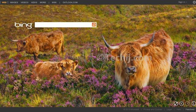 Bing new layout