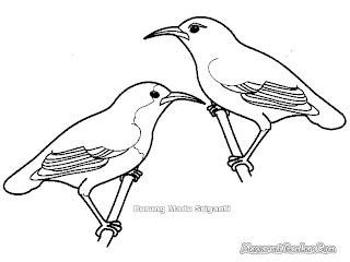 Mewarnai Gambar Burung Madu Sriganti