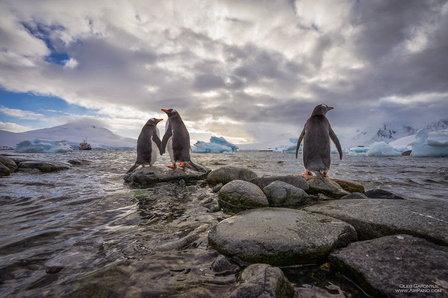 Third superfluous penguin - Cold Yet Beautiful Photos Of Antarctica Taken By AirPano