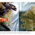 Ini Dia Rempeyek Ikan Cupang yang Sedang Viral di Facebook