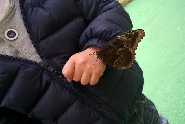 farfalle a esapolis a padova