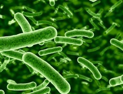 Manfaat Bakteri Probiotik Untuk Tubuh