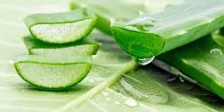 aloe vera gel for glowing skin