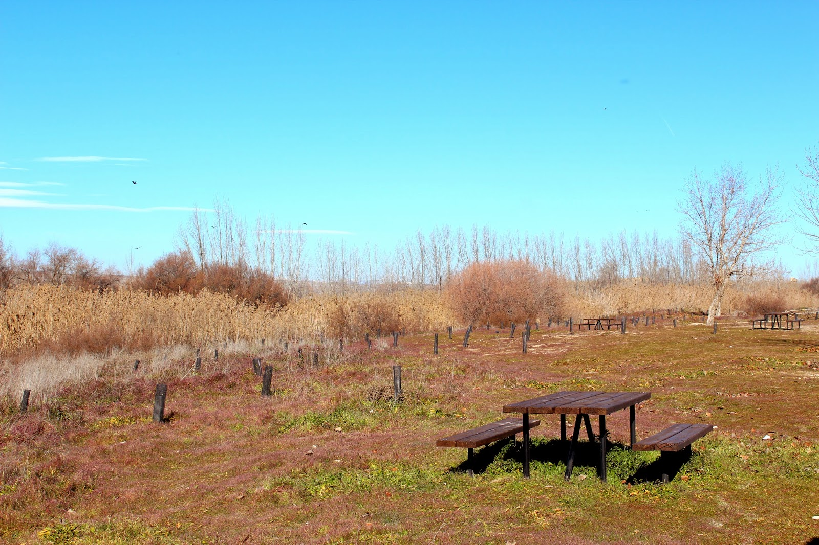 Zona de pic-nic en soto Bayona-Titulcia-Madrid