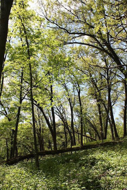 Enjoying the woods of Nachusa Grasslands