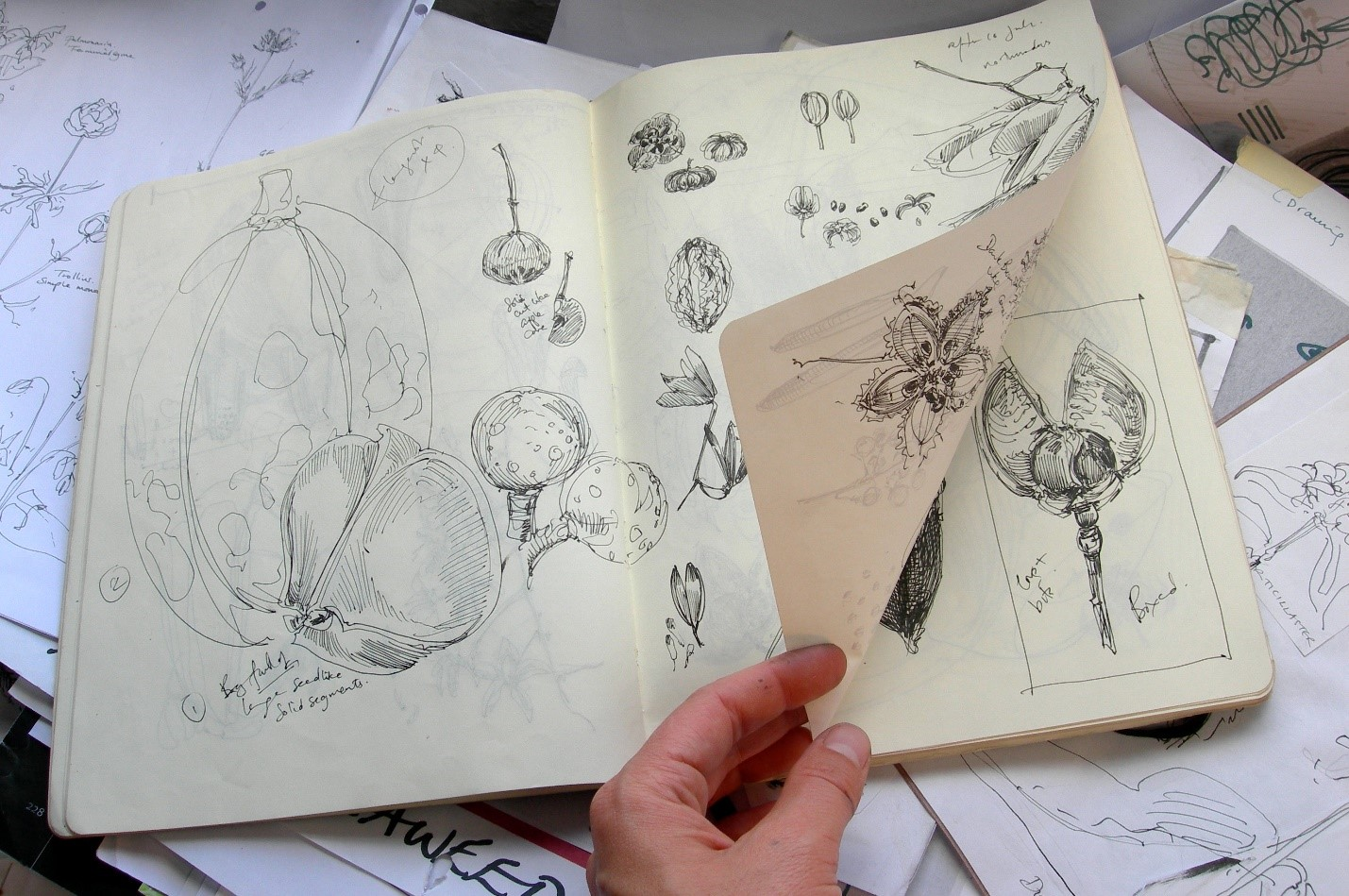 Botanical Illustration: Cafe Botanique with Dr. Sarah Simblet, April ...