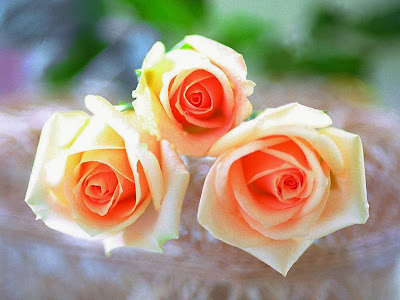 The-orange-rose-image