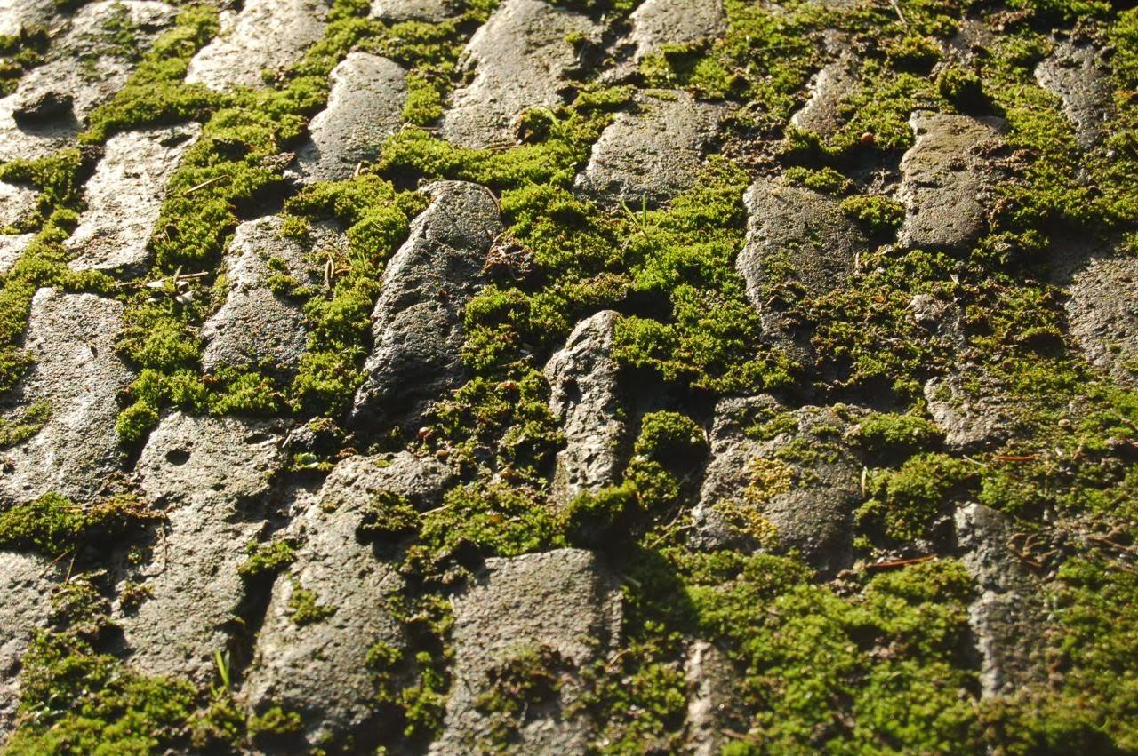 Ik hou van mos for See more com