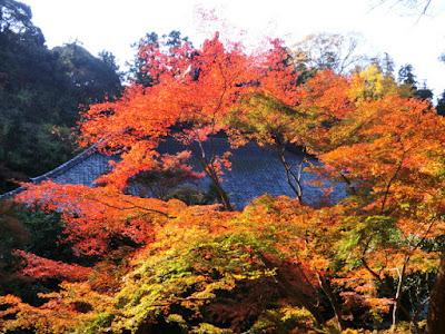 妙本寺の紅葉
