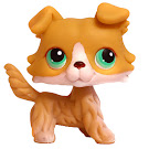 Littlest Pet Shop Tubes Collie (#272) Pet