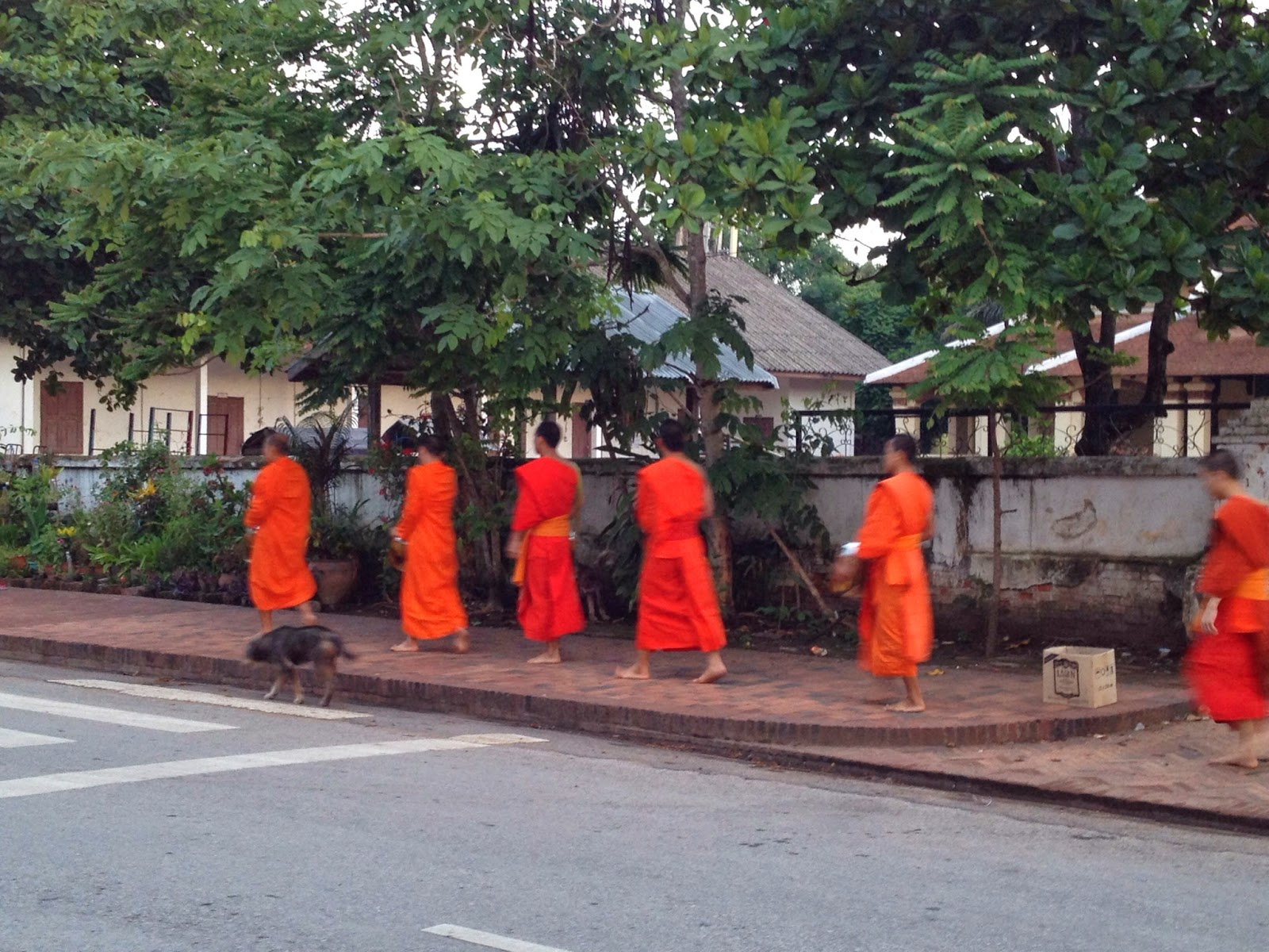 Luang Prabang - Some monks dumped some of their unwanted food into this cardboard box
