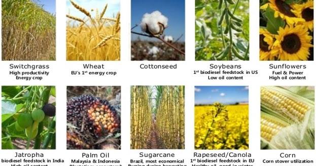 M1L6: Biofuels