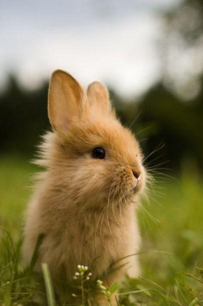 animasi Foto dan gambar imut kelinci lucu lucu ternak kelinci hias kelinci hias kelinci merawat kelinci bergerak
