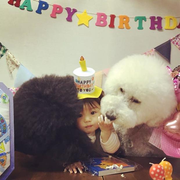 Ngắm nhìn tình bạn đáng yêu của bé gái và chú chó poodle