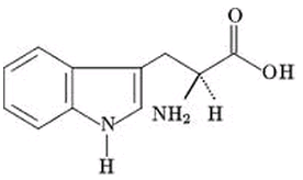 Triptofano - Aminoácido