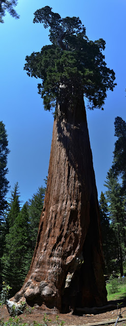 sequoia, top to bottom