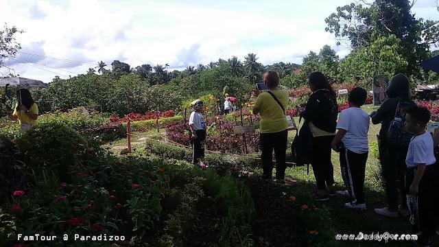 PARADIZOO, Mendez Cavite