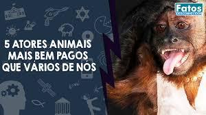 Animais mais bem pagos do mundo