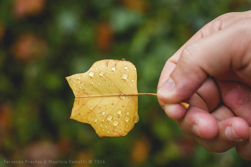 segurando folha amarela com gotas d'água