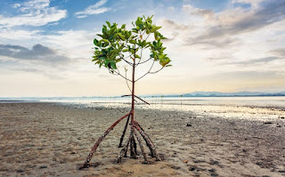 trees, soil, ocean, climate change, environment