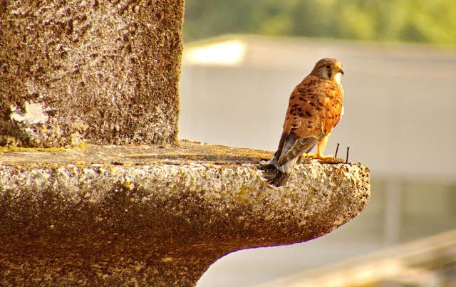 a graciosidade da ave na torre da igreja