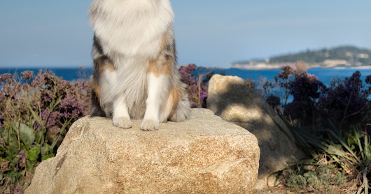 Bliss and Seven's Adventure in Dog Friendly Carmel-by-the-Sea!