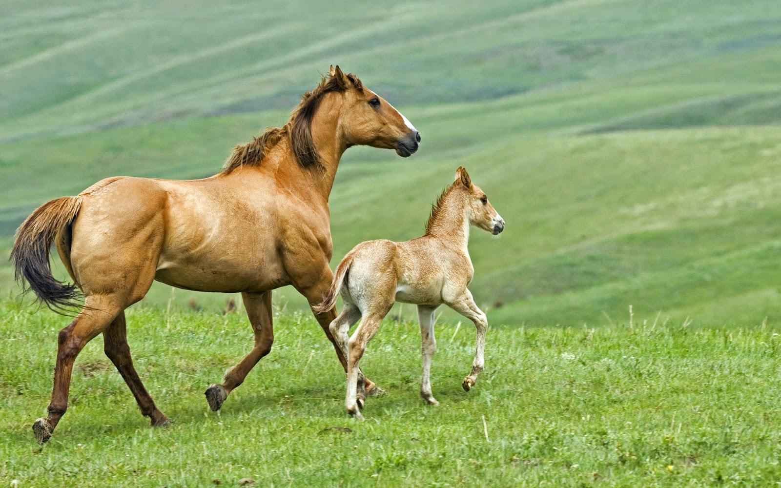 Wallpaper met moeder paard en veulen