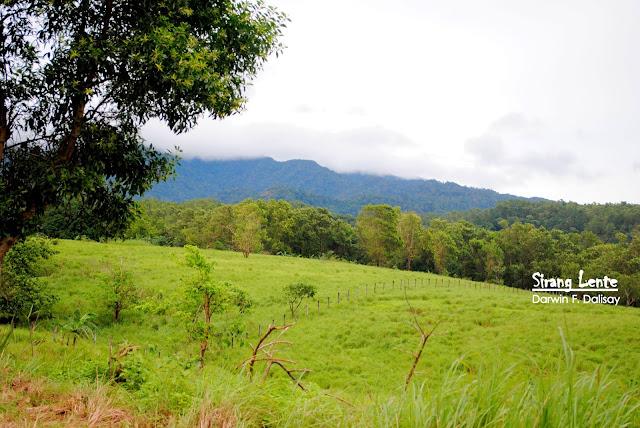 Mt. Tarak trails