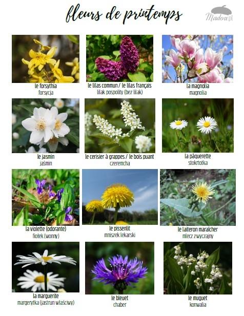 wiosenne kwiaty po francusku