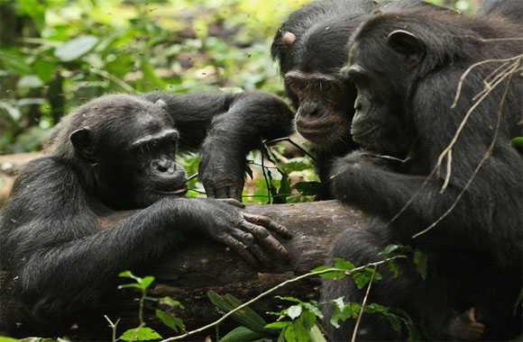 kecerdasan dan komunikasi pada hewan