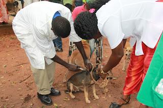 Image result for campanha nacional de vacinação contra a raiva guine bissau